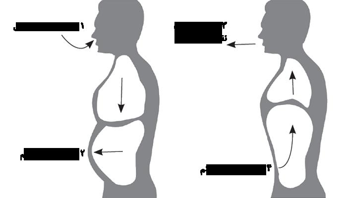 تنفس دیافراگمی